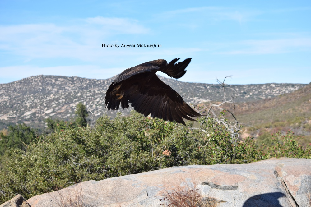 Eagleliftoff