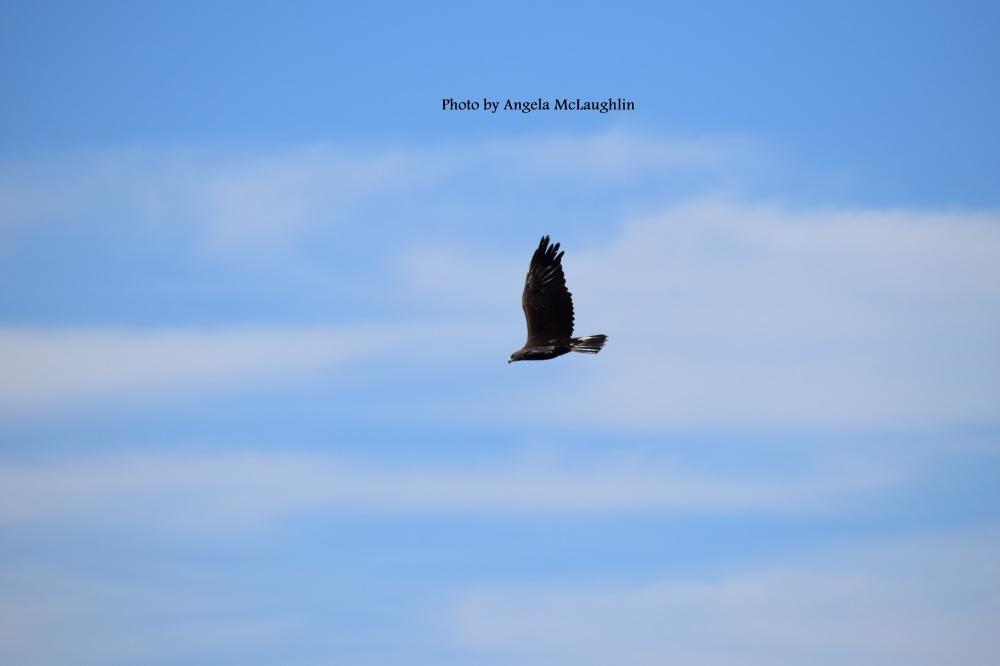 flyingeagle